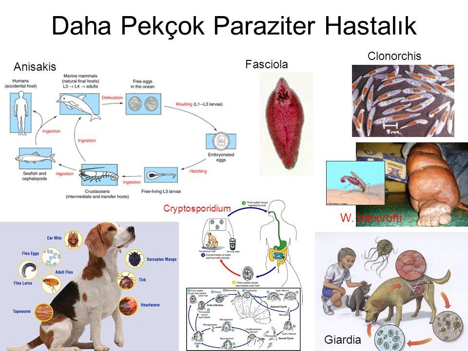 Daha Pekçok Paraziter Hastalık