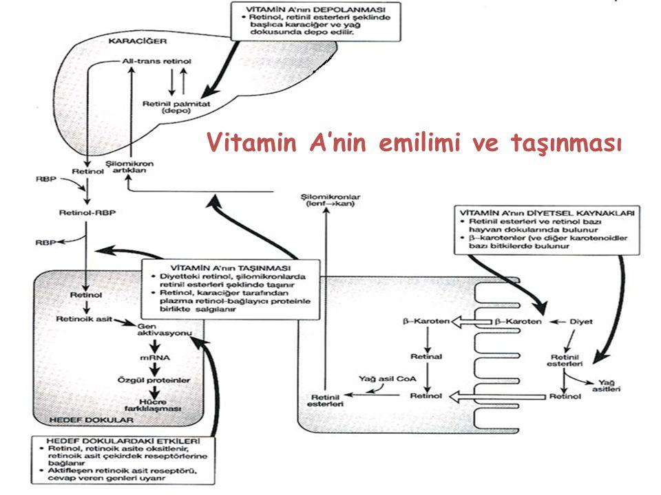 Vitamin A'nin emilimi ve taşınması