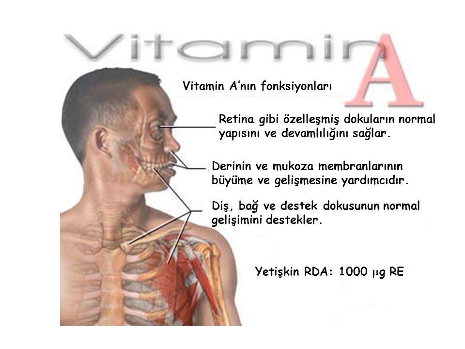 Vitamin A'nın fonksiyonları