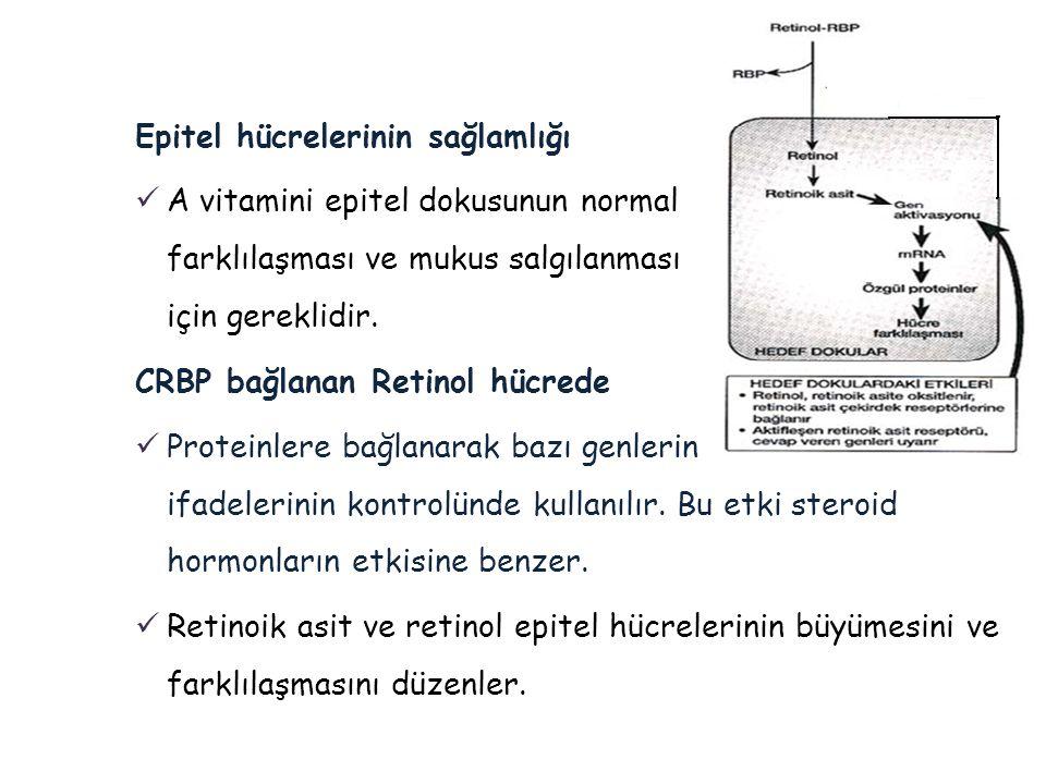 Epitel hücrelerinin sağlamlığı