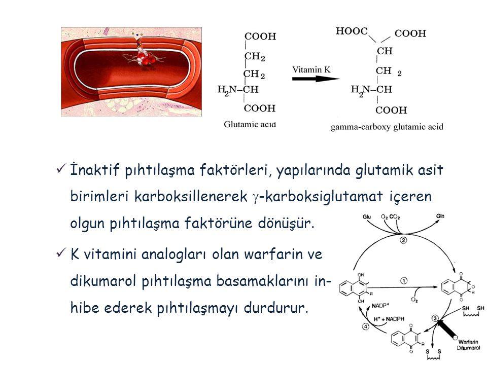 İnaktif pıhtılaşma faktörleri, yapılarında glutamik asit birimleri karboksillenerek g-karboksiglutamat içeren olgun pıhtılaşma faktörüne dönüşür.