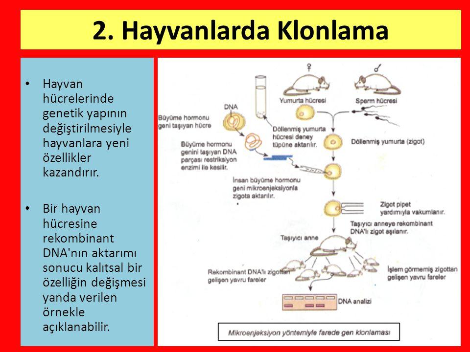 2. Hayvanlarda Klonlama Hayvan hücrelerinde genetik yapının değiştirilmesiyle hayvanlara yeni özellikler kazandırır.