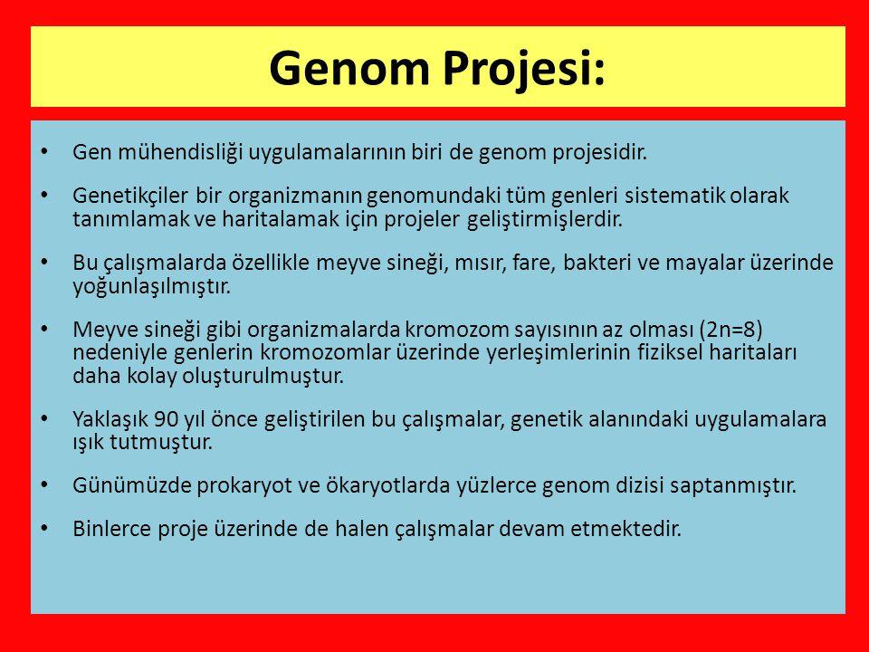 Genom Projesi: Gen mühendisliği uygulamalarının biri de genom projesidir.