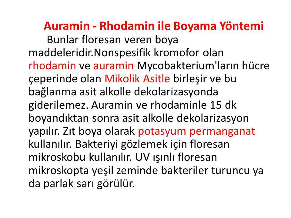 Auramin - Rhodamin ile Boyama Yöntemi