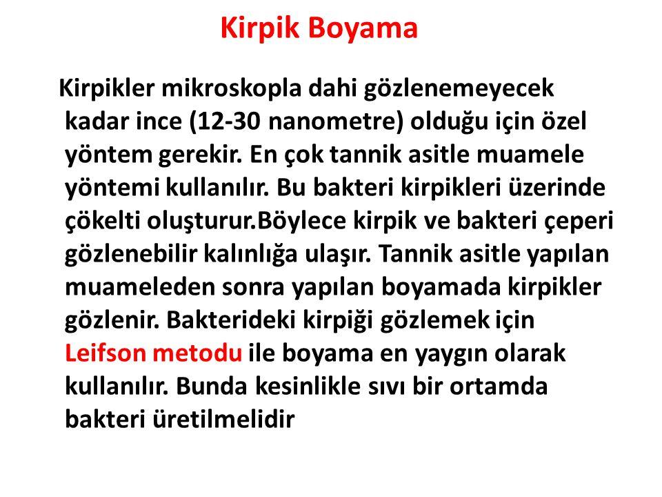 Kirpik Boyama