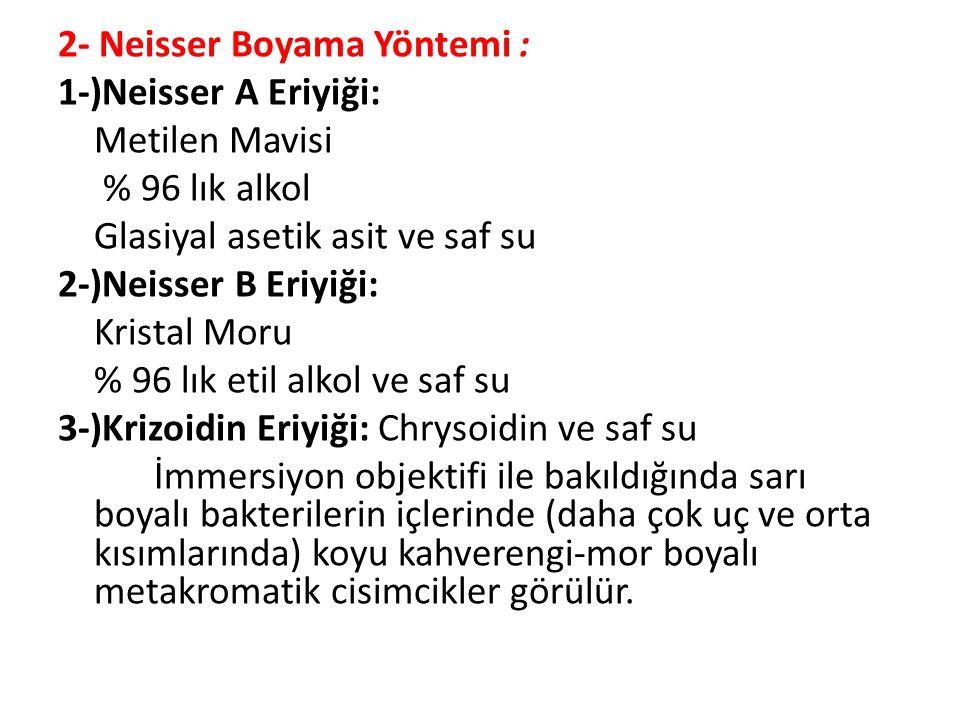 2- Neisser Boyama Yöntemi :