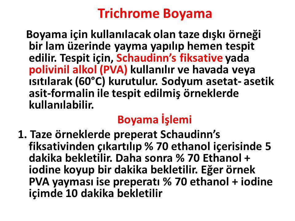 Trichrome Boyama