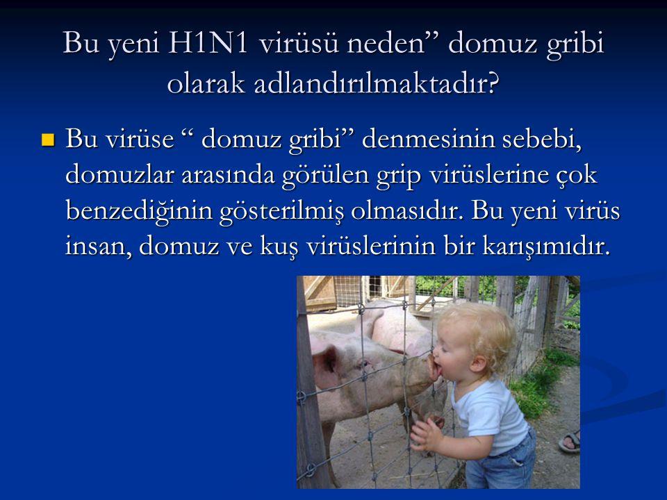 Bu yeni H1N1 virüsü neden domuz gribi olarak adlandırılmaktadır