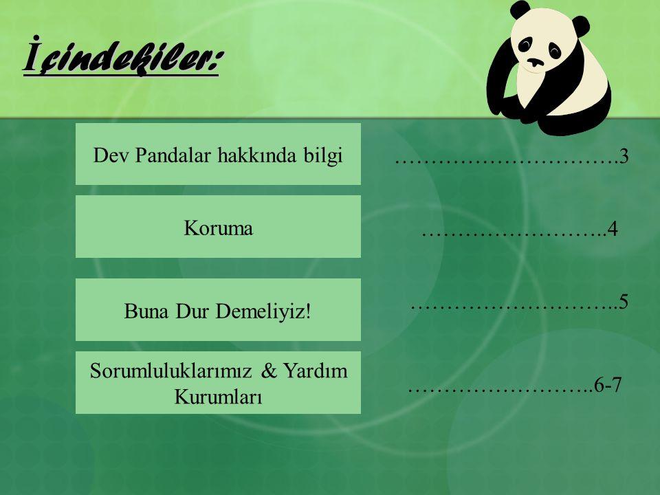 İçindekiler: Dev Pandalar hakkında bilgi ………………………….3 Koruma
