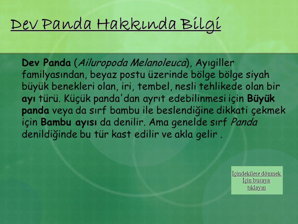 Dev Panda Hakkında Bilgi