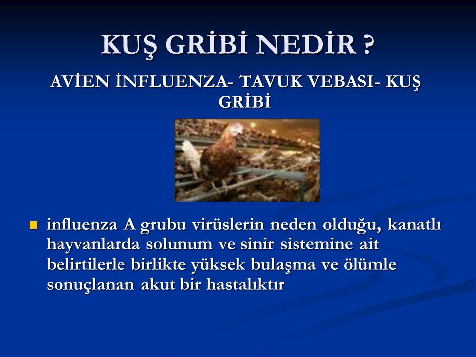 AVİEN İNFLUENZA- TAVUK VEBASI- KUŞ GRİBİ
