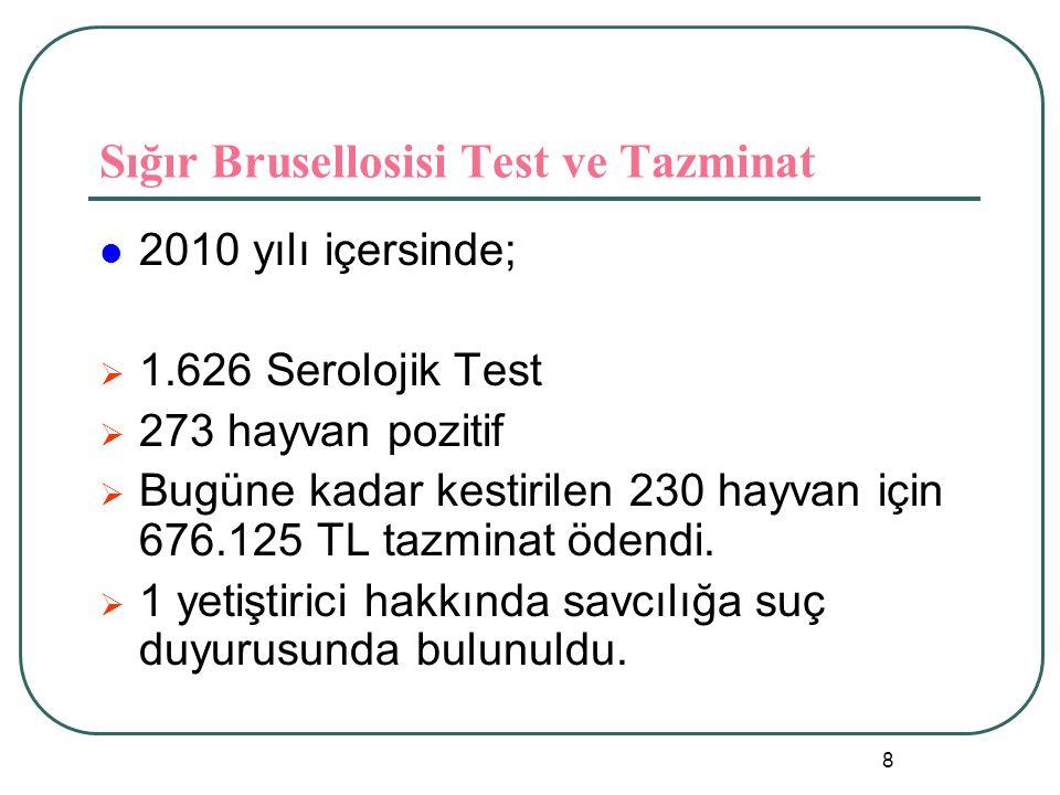 Sığır Brusellosisi Test ve Tazminat