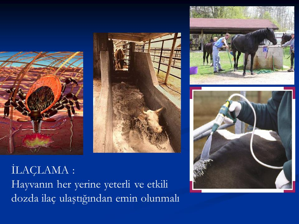İLAÇLAMA : Hayvanın her yerine yeterli ve etkili dozda ilaç ulaştığından emin olunmalı