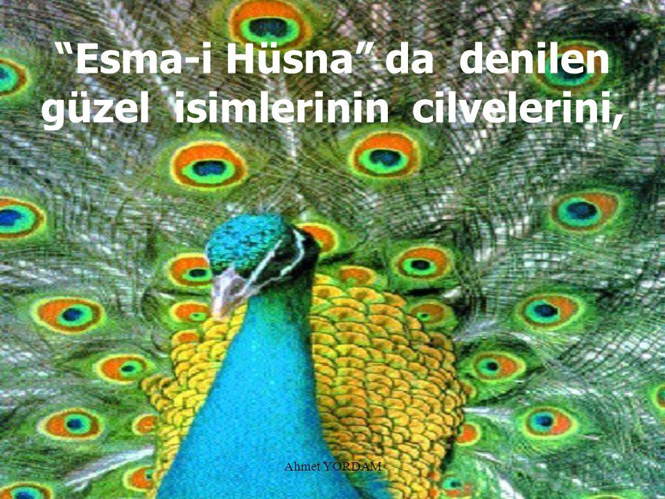 Esma-i Hüsna da denilen güzel isimlerinin cilvelerini,