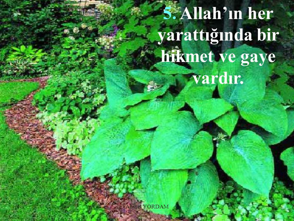 5. Allah'ın her yarattığında bir hikmet ve gaye vardır.