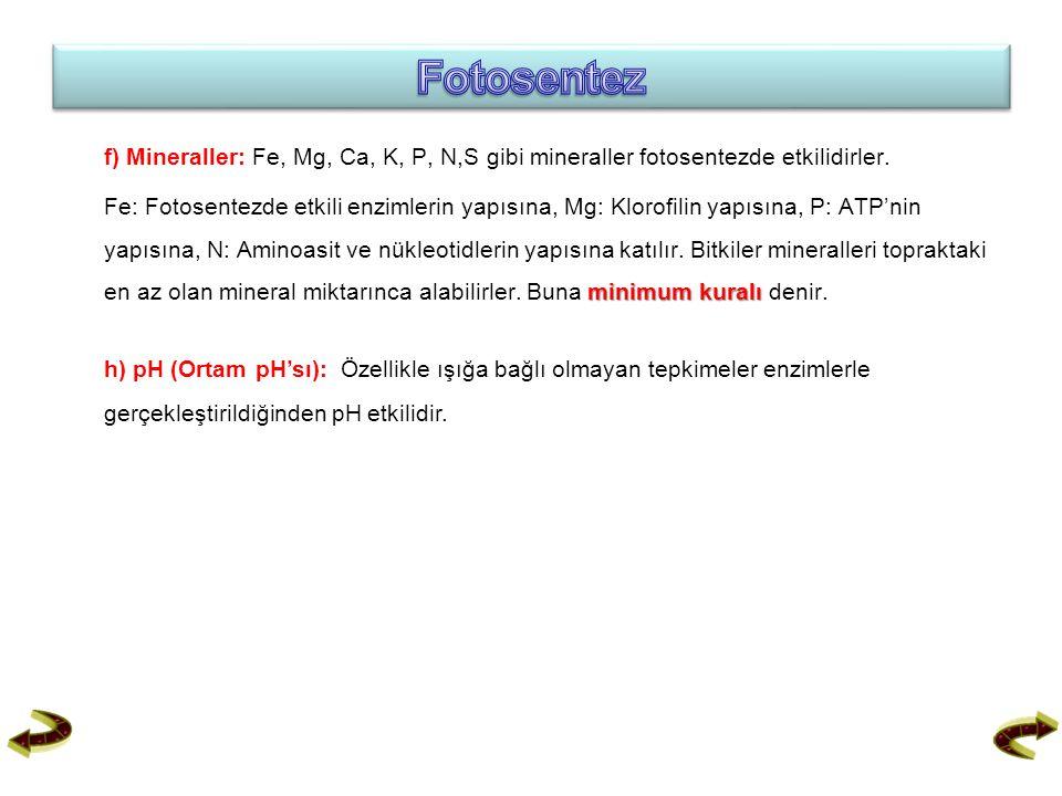 Fotosentez f) Mineraller: Fe, Mg, Ca, K, P, N,S gibi mineraller fotosentezde etkilidirler.