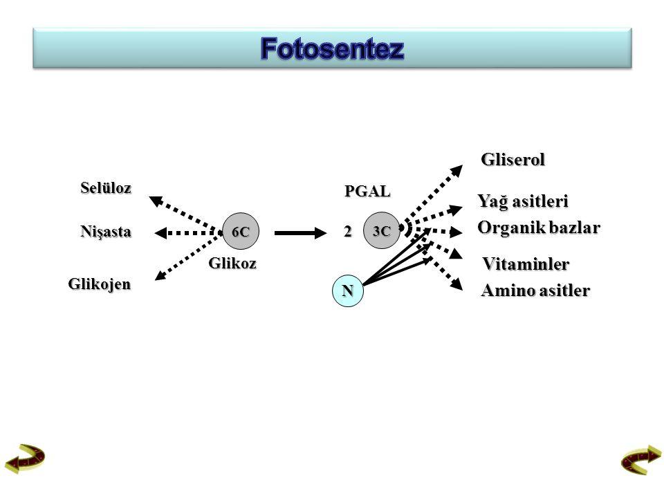 Fotosentez Gliserol Yağ asitleri Organik bazlar Vitaminler