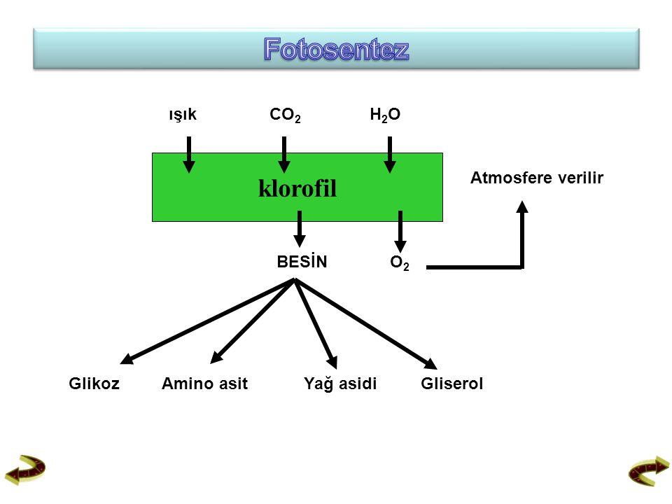 Fotosentez klorofil ışık CO2 H2O Atmosfere verilir BESİN O2 Glikoz