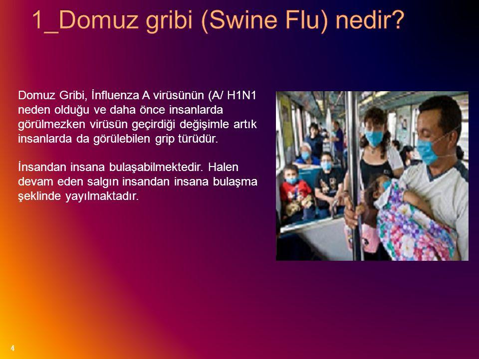 1_Domuz gribi (Swine Flu) nedir