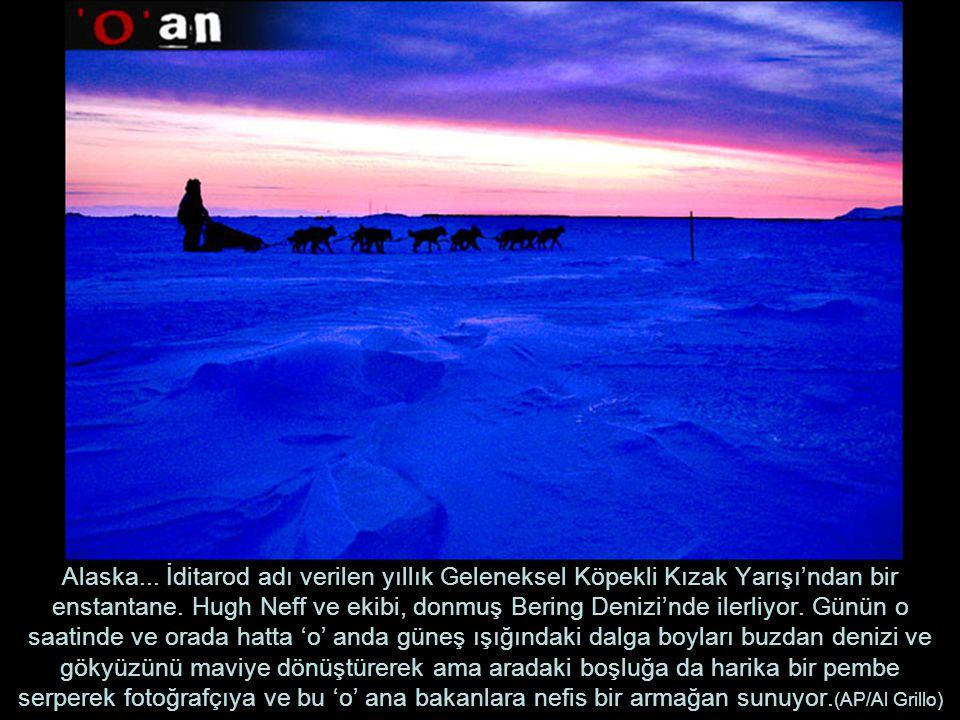 Alaska... İditarod adı verilen yıllık Geleneksel Köpekli Kızak Yarışı'ndan bir enstantane.