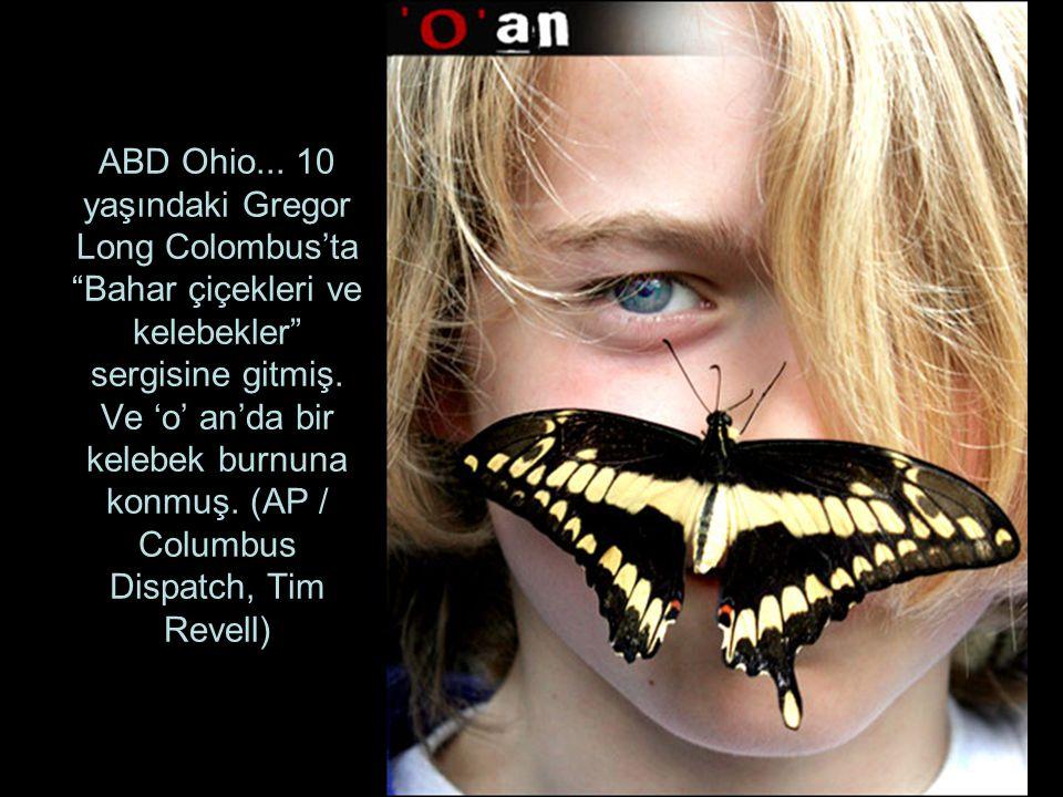 ABD Ohio... 10 yaşındaki Gregor Long Colombus'ta Bahar çiçekleri ve kelebekler sergisine gitmiş.