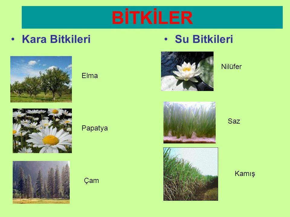 BİTKİLER Kara Bitkileri Su Bitkileri Nilüfer Elma Saz Papatya Kamış