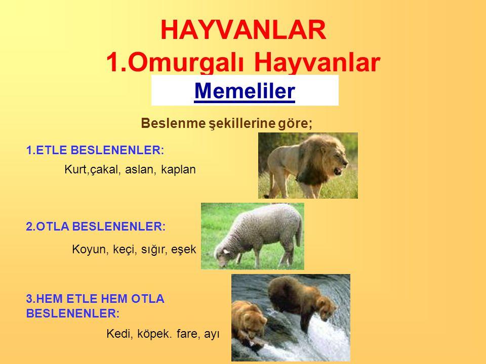HAYVANLAR 1.Omurgalı Hayvanlar
