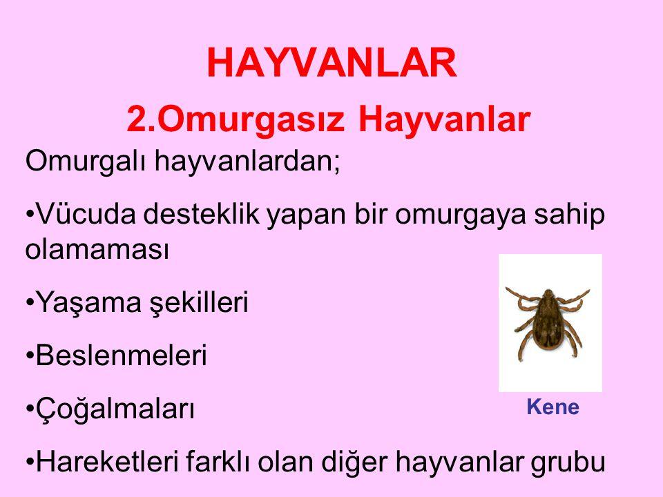 HAYVANLAR 2.Omurgasız Hayvanlar Omurgalı hayvanlardan;