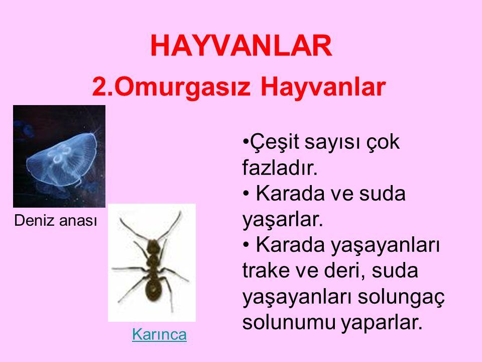 HAYVANLAR 2.Omurgasız Hayvanlar