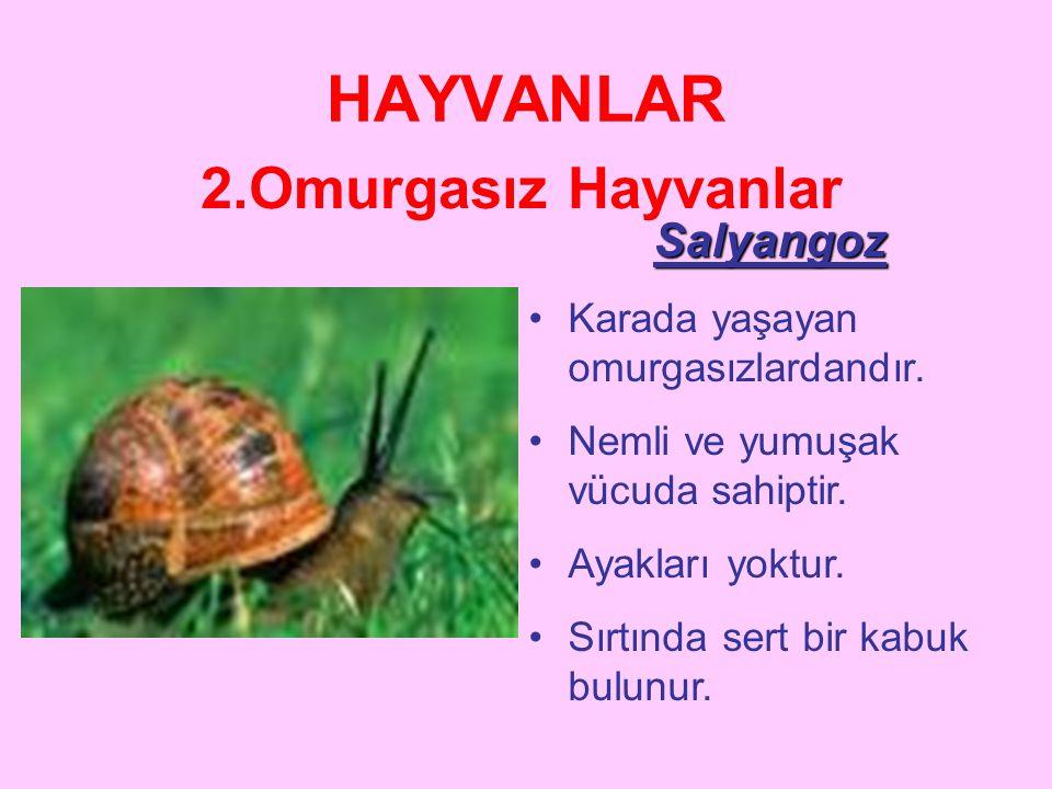HAYVANLAR 2.Omurgasız Hayvanlar Salyangoz