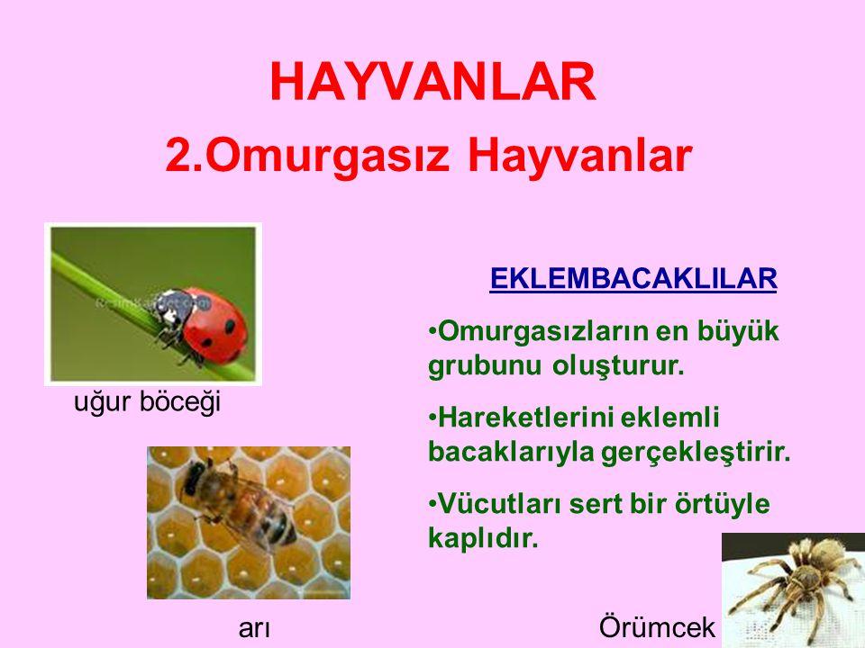 HAYVANLAR 2.Omurgasız Hayvanlar EKLEMBACAKLILAR