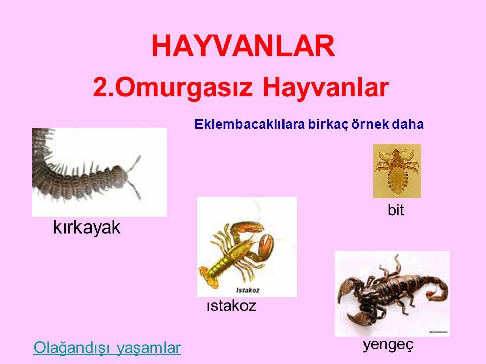 HAYVANLAR 2.Omurgasız Hayvanlar kırkayak bit ıstakoz yengeç