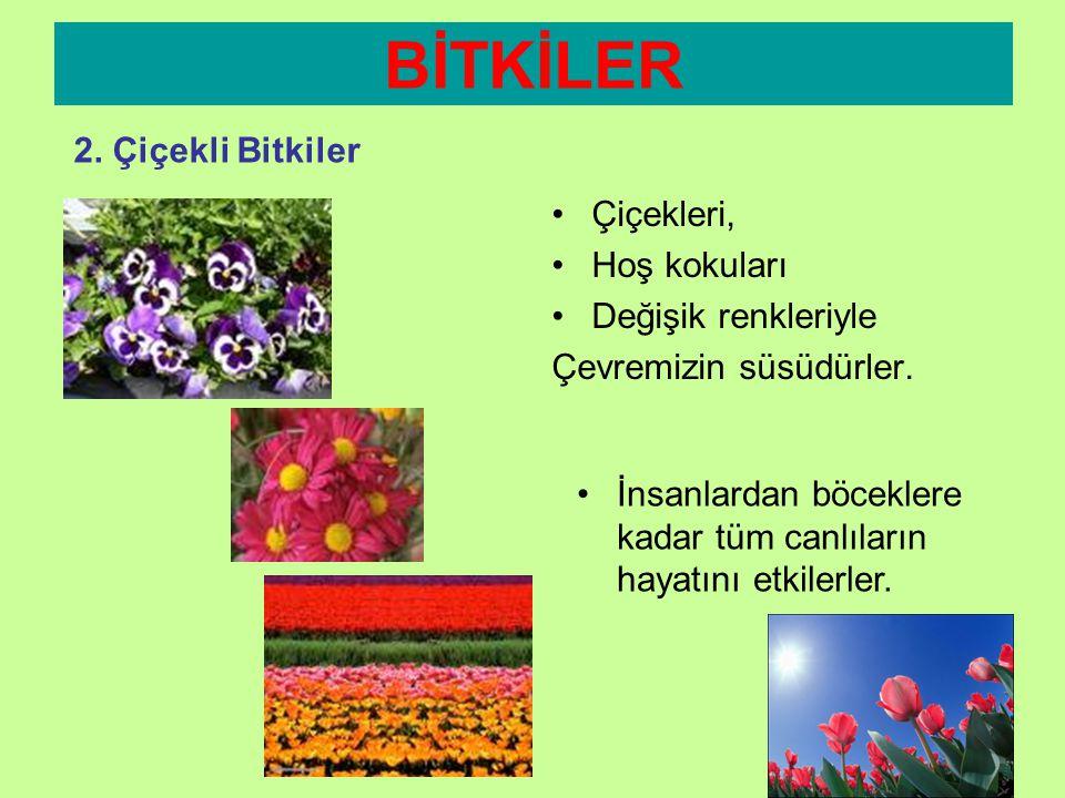 BİTKİLER 2. Çiçekli Bitkiler Çiçekleri, Hoş kokuları