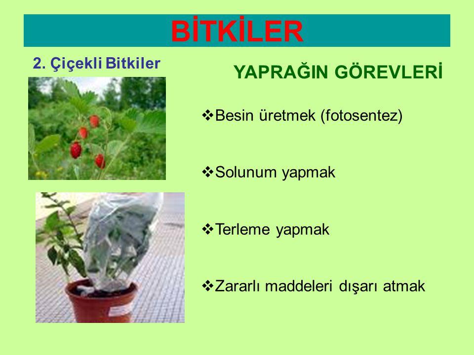 BİTKİLER YAPRAĞIN GÖREVLERİ 2. Çiçekli Bitkiler