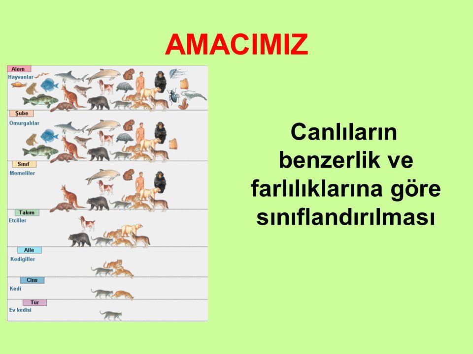 Canlıların benzerlik ve farlılıklarına göre sınıflandırılması