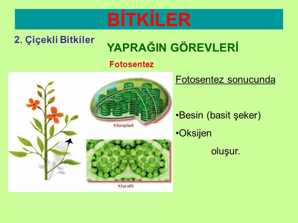 BİTKİLER YAPRAĞIN GÖREVLERİ 2. Çiçekli Bitkiler Fotosentez sonucunda