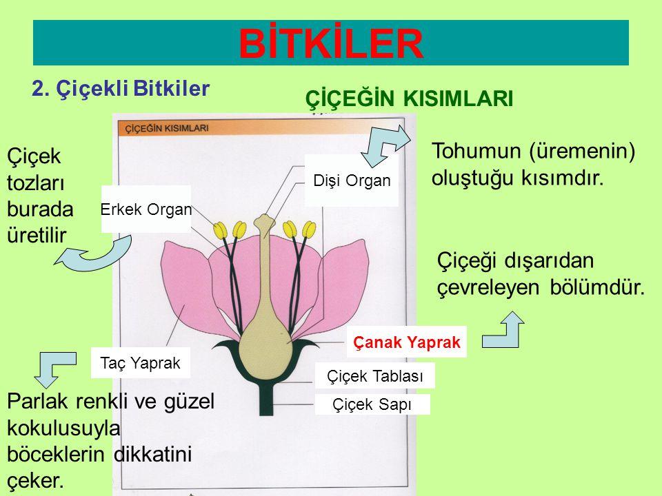BİTKİLER 2. Çiçekli Bitkiler ÇİÇEĞİN KISIMLARI
