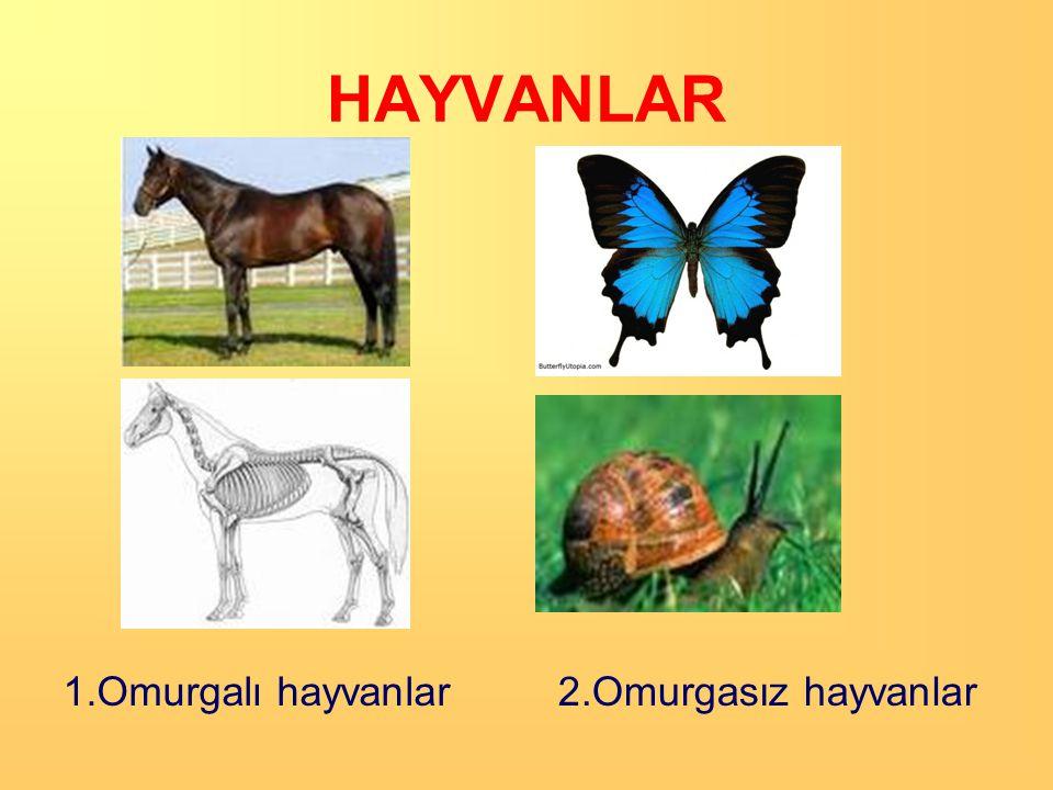 HAYVANLAR 1.Omurgalı hayvanlar 2.Omurgasız hayvanlar