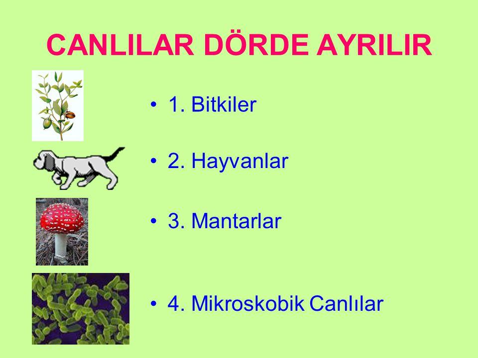CANLILAR DÖRDE AYRILIR