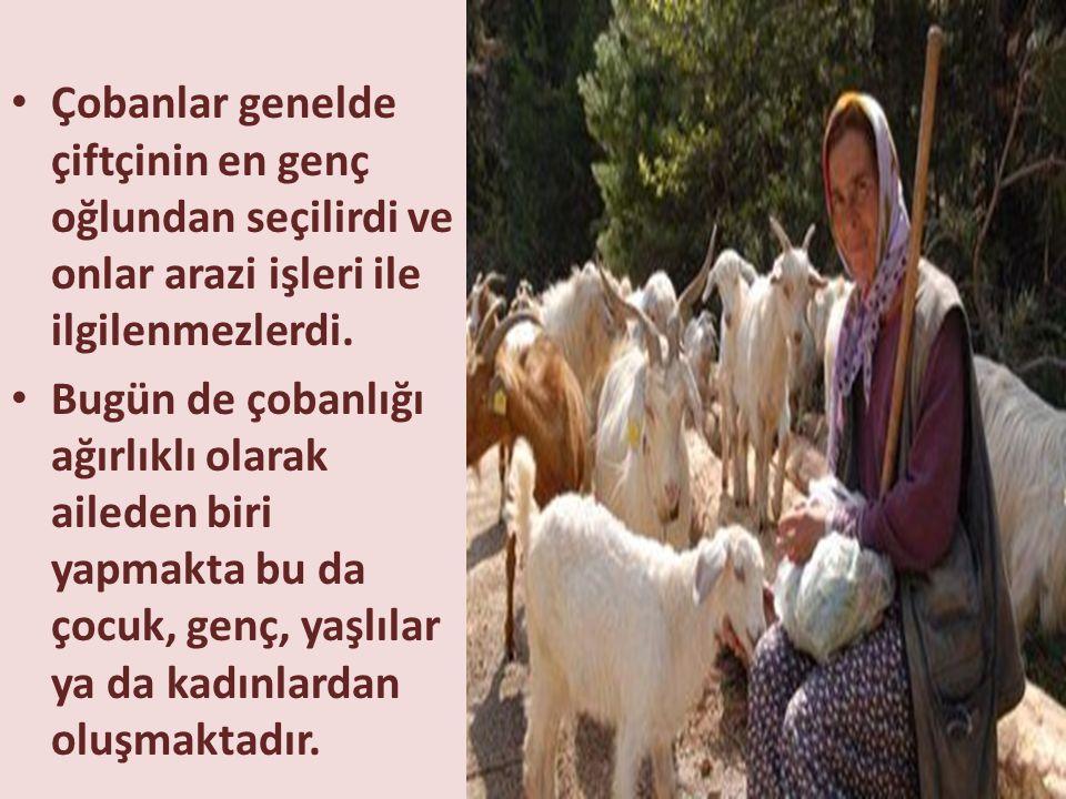 Çobanlar genelde çiftçinin en genç oğlundan seçilirdi ve onlar arazi işleri ile ilgilenmezlerdi.