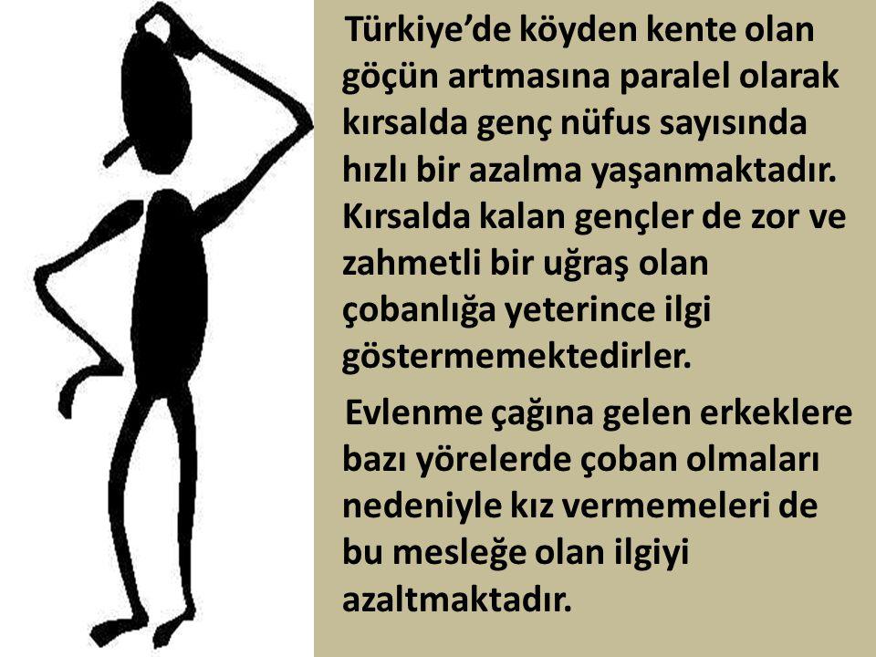 Türkiye'de köyden kente olan göçün artmasına paralel olarak kırsalda genç nüfus sayısında hızlı bir azalma yaşanmaktadır. Kırsalda kalan gençler de zor ve zahmetli bir uğraş olan çobanlığa yeterince ilgi göstermemektedirler.