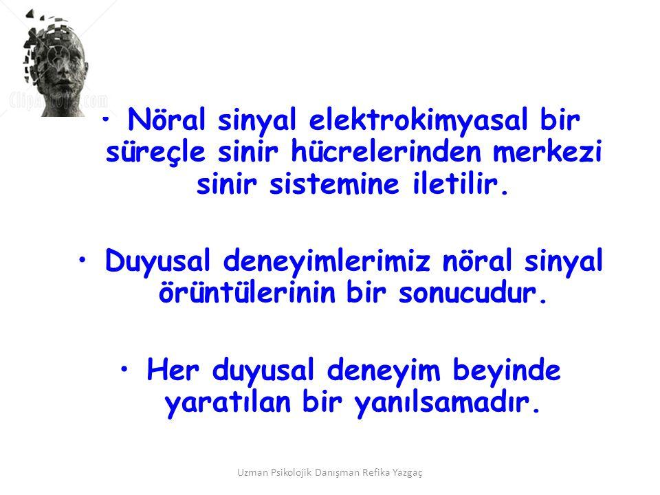 Duyusal deneyimlerimiz nöral sinyal örüntülerinin bir sonucudur.