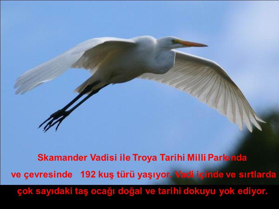 Skamander Vadisi ile Troya Tarihi Milli Parkında