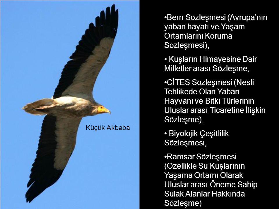 Kuşların Himayesine Dair Milletler arası Sözleşme,