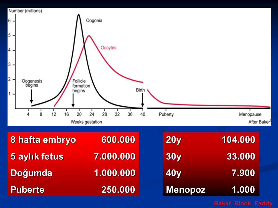 8 hafta embryo 600.000 5 aylık fetus 7.000.000 Doğumda 1.000.000
