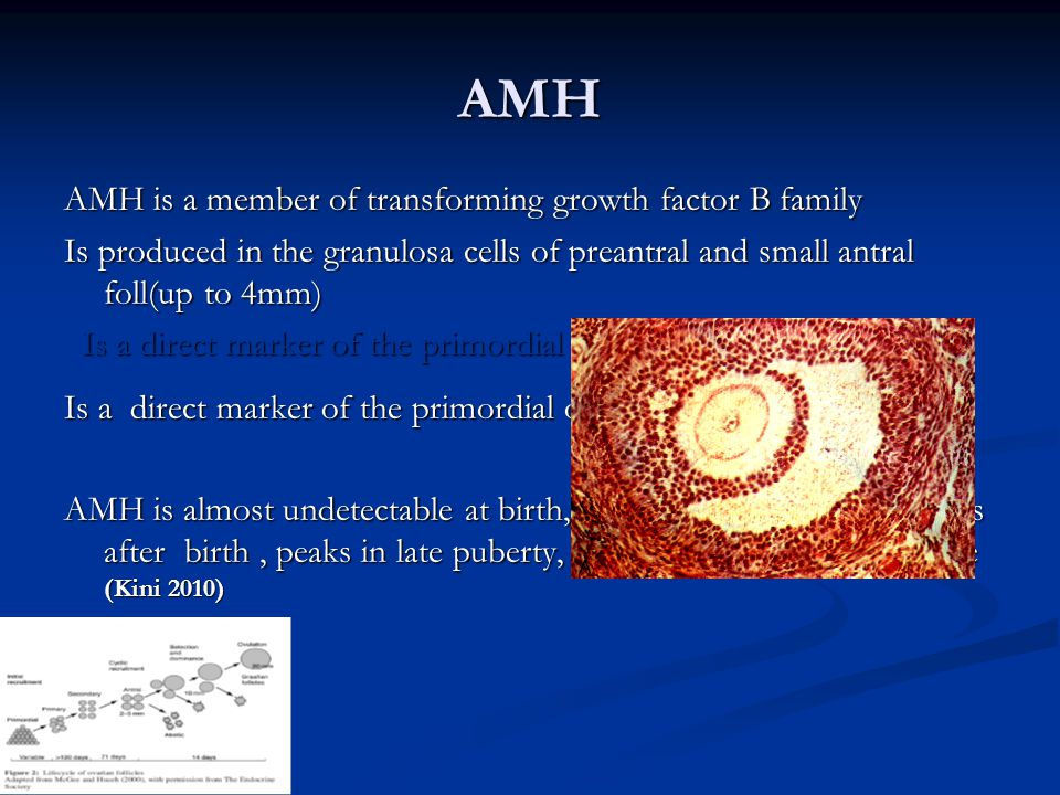 AMH AMH is a member of transforming growth factor B family