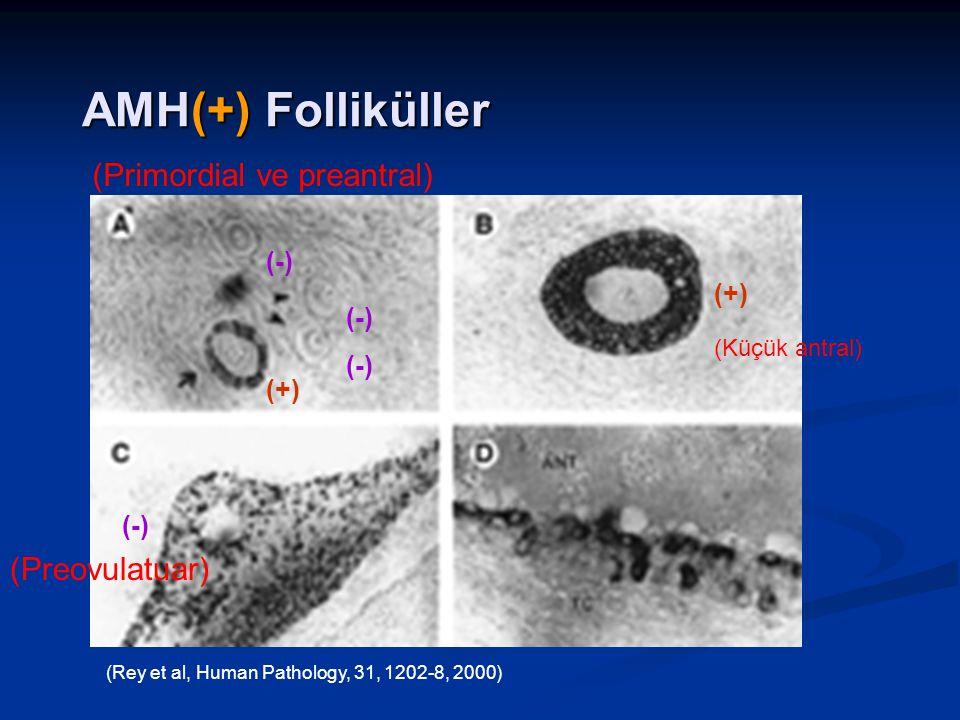 AMH(+) Folliküller (Primordial ve preantral) (Preovulatuar) (-) (+)