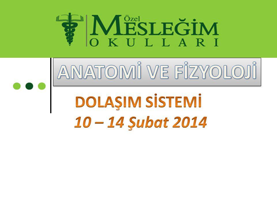 ANATOMİ VE FİZYOLOJİ DOLAŞIM SİSTEMİ 10 – 14 Şubat 2014