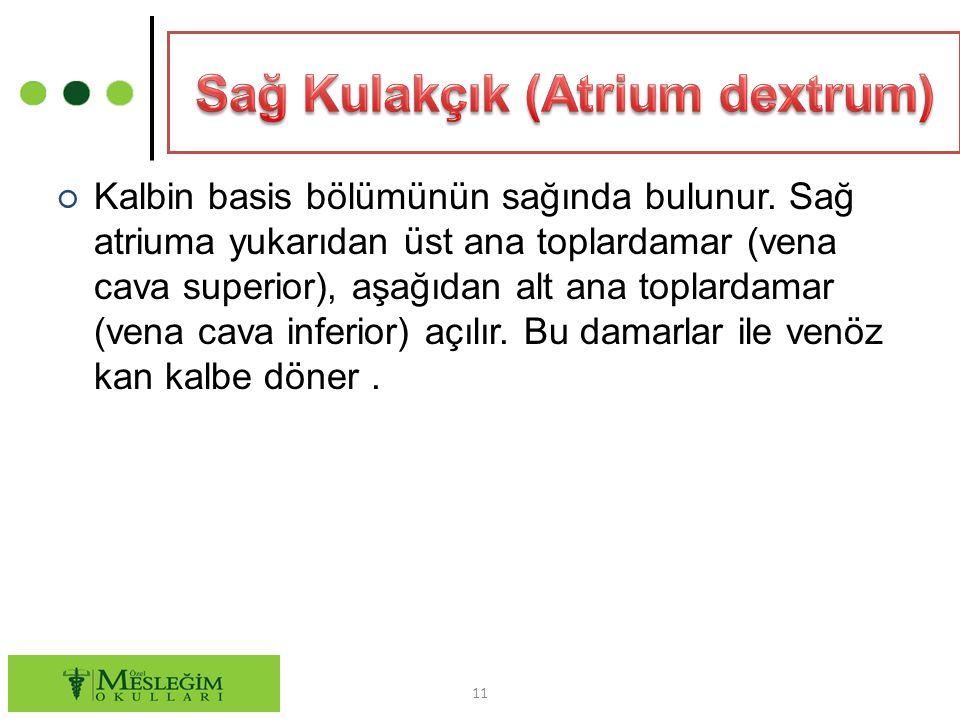 Sağ Kulakçık (Atrium dextrum)