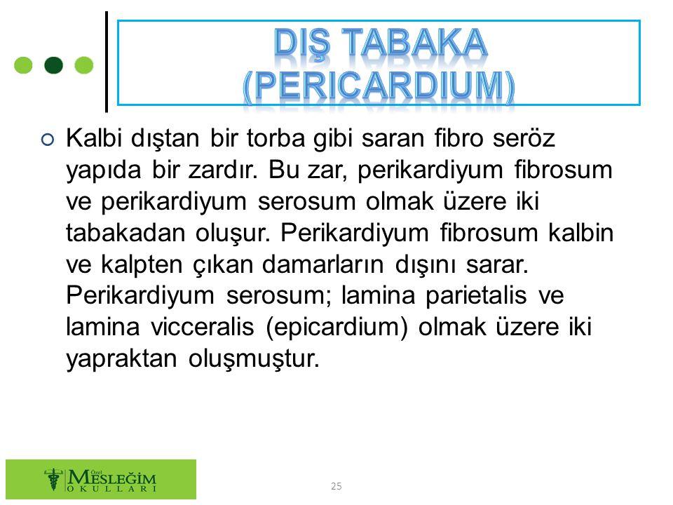 DIş tabaka (Pericardium)